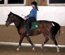 losgelassenheit pferd verbessern