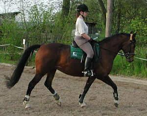 halbe parade pferd